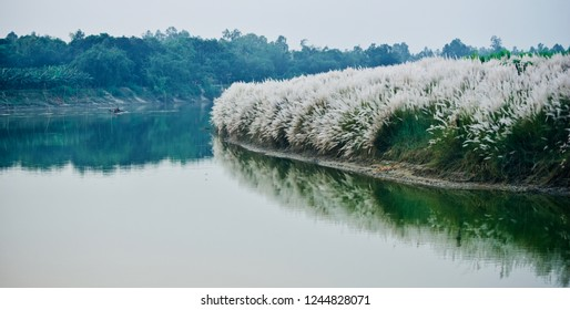 River water with catkins flowers in the bank unique natural photo