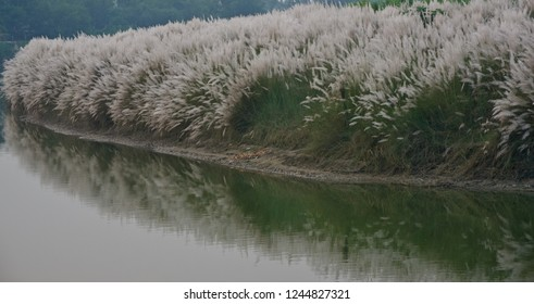 River water with catkins flowers isolated unique blurry photo