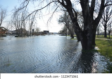 River water during a flood with flooded trees on a river bank