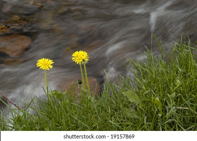 River water flowing past rocks and stones with yellow flowers