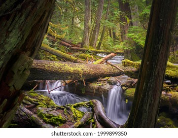 River waterfall in a mossy forest. Forest stream. River stream in mossy forest. Mossy forest stream