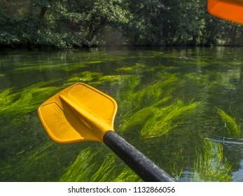 River Wda, Poland - August 26, 2016: Paddles and their reflection in the river, Czarna Woda, Wda, Pomeranian Voivodeship, Bory Tucholskie,