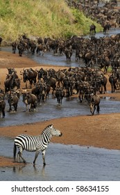 River of wildebeest crossing the Mara River during the migration, Serengeti, Tanzania