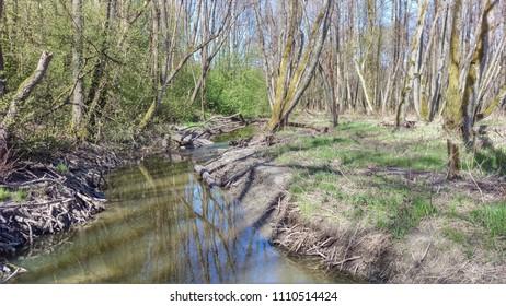 River Zabava Russia - Shutterstock ID 1110514424