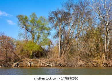 Riverbank of calm Danube river with green trees in early spring