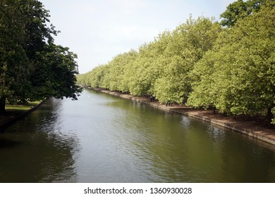 A Riverbank lined with tall trees.