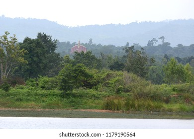 Riverbank on trees background for landscape