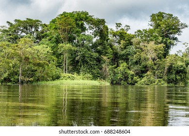 Riverbank of the Rio Samiria Amazon with jungle reflection in the water