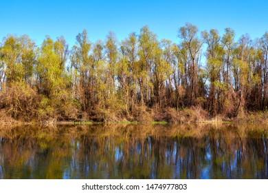 Riverbank Trees on the banks of the Danube river in the early spring. Danube natural river landscape. Spring on Danube river.