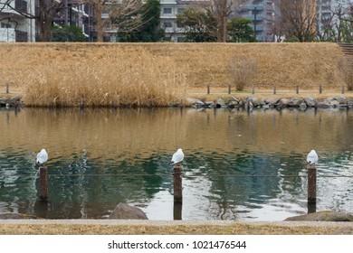 riverbed, Japan Tokyo