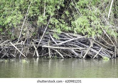Rivers and nature around