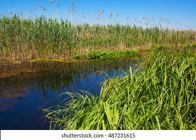 Riverside vegetation in daylight on river banks