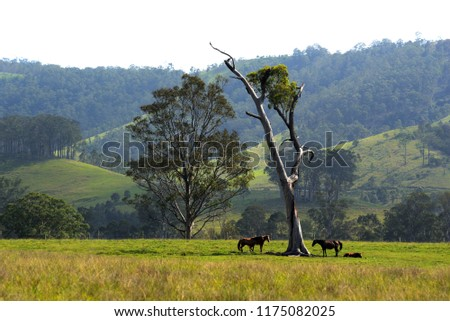 Riverwood Down- NSW - Australia