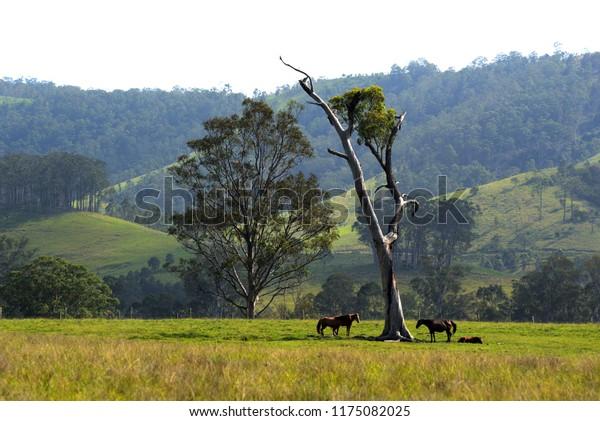 Riverwood Down- NSW - Australia