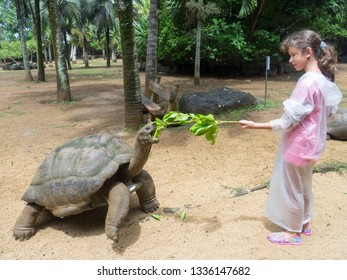 Riviere des Anguilles/Mauritius: February 08 2016: Young girl feeding one turtle at La Vanille Nature Park. The Vanille Réserve des Mascareignes nature park, is located in the South of Mauritius.