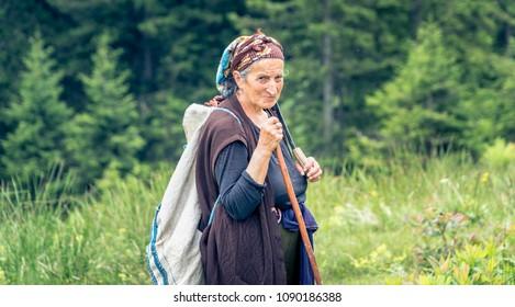 Rize, Turkey - July 2017: Unidentified old shephard woman in Blacksea Karadeniz region