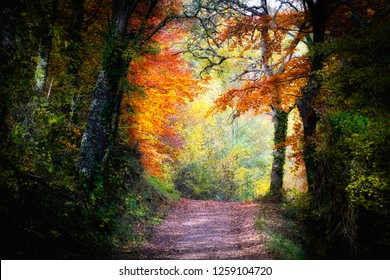 Road across the autumn forest