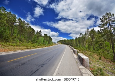 road across forest