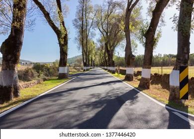 Road in Alentejo, Portugal. Tree, blue sky, spring time