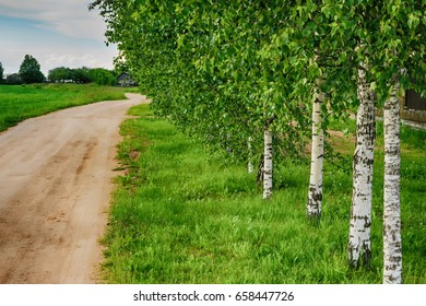 Road along the birchwood lead to the wooden house under blue and free sky.Fresh air around is best for tourism and recreation. Happy trip to the village.Concept of traveling to Russia.Purity of nature