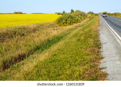 the road along the field with yellow flowers, the horizon of the field and the road is joined sideways, summer day clear sky