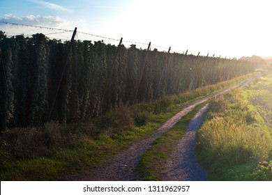 Road along hop field in Zatec hops area. Czech Republic.