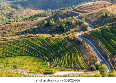 Road along the vineyard in the Comarca Priorat is a famous wine-growing area where the prestigious wine of the Priorat and Montsant is produced. Wine has been cultivated here since the 12th century