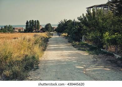 Road along the wheatfield