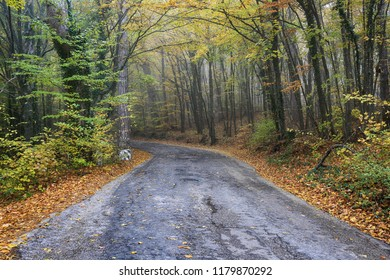 Road among the autumn forest