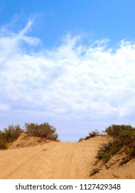 Road among sand dunes with low bushes and traces of cars, people and animals in the vicinity of Holon.