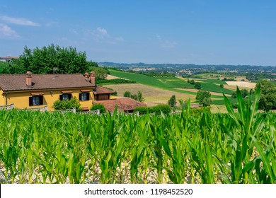 The road from Antihnano to San Martino Alfieri, Asti, Monferrato, Piedmont, Italy, at summer