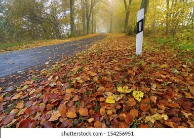 road, autumn, fog, foliage