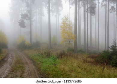 Road in the autumn foggy forest
