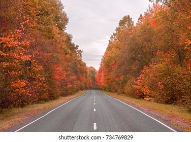 Road in autumn forest and beautiful scenery along the sides of the road. bright trees