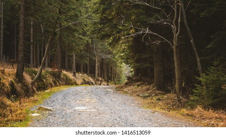 Road in the autumn forest. Tourists route. Karpacz, Poland, Europe