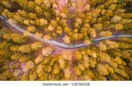 Road in autumn forest. Road in yellow forestview frome above. Transportation background.