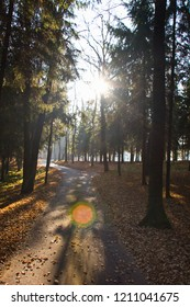 Road in the autumn pine oak forest on a sunny autumn morning. Landscape background, substrate.