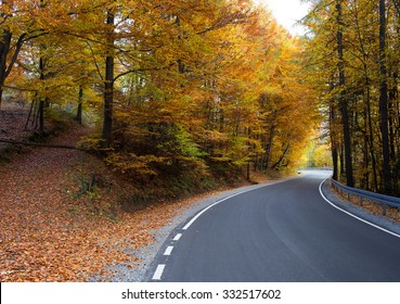 road in autumn scenery