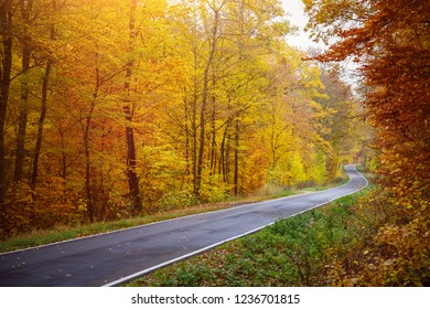 Road in Autumn Time