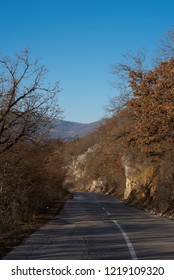 road and autumn trees