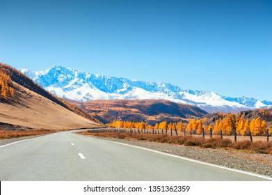 Road with autumn trees and snow-covered mountains. Chuysky tract in Altai Republic, Siberia, Russia. View of North-Chuya ridge