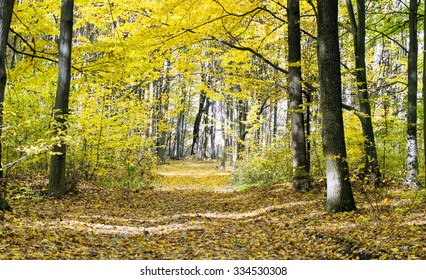 The road in the autumn wood in yellow and green tones