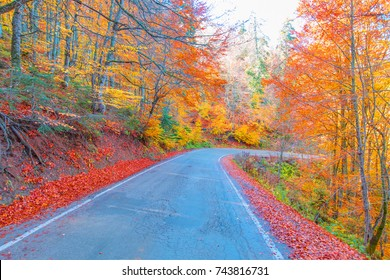 Road in the autumnal forest in Abant Lake - Turkey