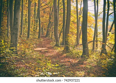 The road in the beautiful autumn forest