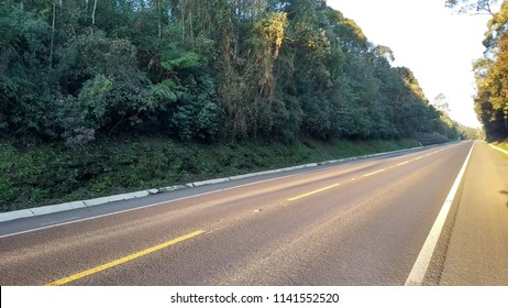 Road beside trees at sunshine