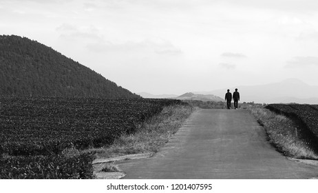 road between green tea fields with a few persons walking on and a low hill ahead in jeju island, Korea