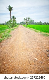 Road between rice field and sky