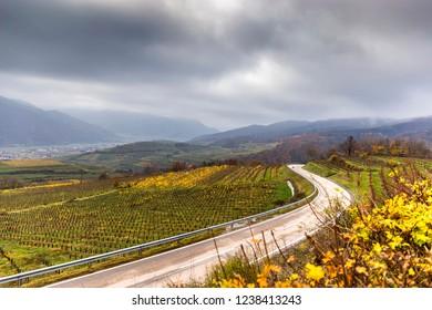Road between vineyards, Wachau, Austria.