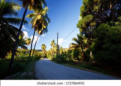 Eine Straße namens Fig Tree Drive im Zentrum von Antigua, ein wenig ironisch, weil es vor allem Kokospalmen.