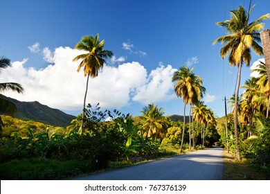 A road called Fig Tree Drive in the centre of Antigua, a bit ironically because it features mostly coconut palm trees.